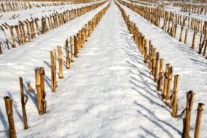 Winter grafisch – Claus Liewerkus