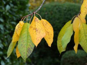 Herbstlaub – Gisela Krause