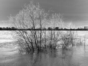 Land unter – Gisela Krause