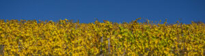 Blaugold – Karl Röser