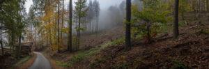 Im Nebel – Karl Röser