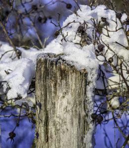 Schneehaube – Karl Röser
