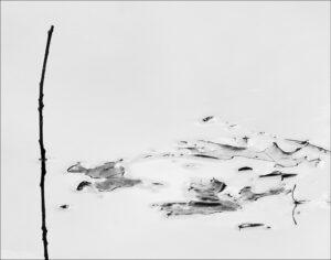 Stengel 2 – Olina Fritsche
