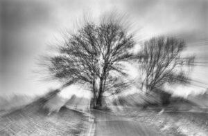 Baum im Kreisverkehr – Peter Krieger