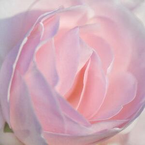 Blume – Udo Krämer