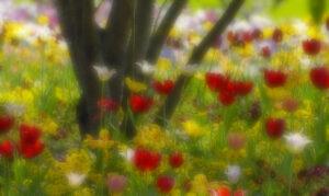 Blumen – Udo Krämer