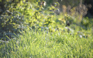 Gras – Udo Krämer