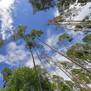 Hohe Bäume – Udo Krämer