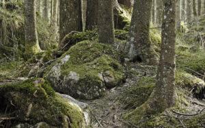Wald – Udo Krämer