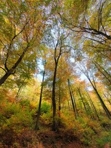 Herbst – Ute Krämer