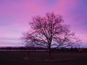 Sonnenuntergang – Ute Krämer