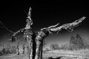Alter Baum – Volker Frenzel