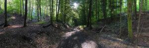 Waldweg – Volker Frenzel