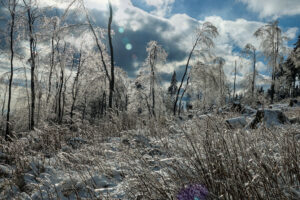 Frost – Winfried Toussaint