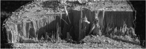 Holzschnitt – Winfried Toussaint